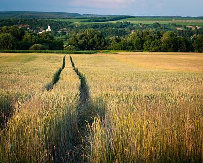 Wheat Field Art Print by Brian Neely