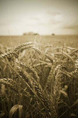 Photograph - Wheat Field by Ethiriel  Photography