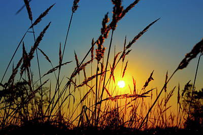 Wheat Silhouette Photograph - Wheat Field In Sunrise by Wladimir Bulgar