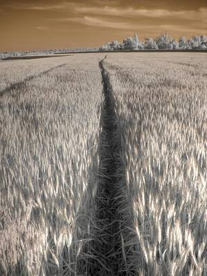 Infared Photograph - Wheat Field by Jane Linders