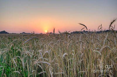 D700 Photograph - Wheat Field Sunrise by Michael Ver Sprill