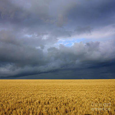 Wheat Field Under A Overcast. Auvergne. France. Print by Bernard Jaubert