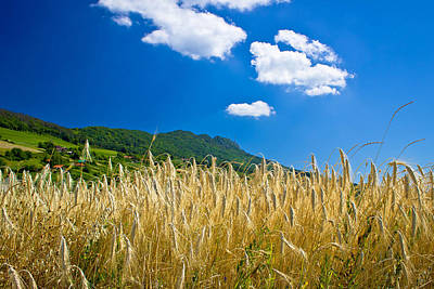 Fruits And Vegetables Still Life - Wheat field under colorful mountain by Brch Photography