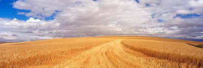 Wheat Field, Washington State, Usa Print by Panoramic Images