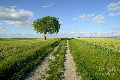 Walnut Tree Photograph - Wheat Field With Tree by Christen/Okapia