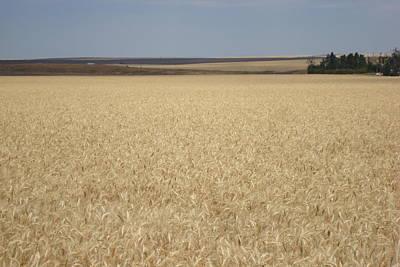 Wheat Fields Forever Art Print