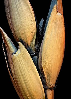 Wheat Grains Art Print by Stefan Diller