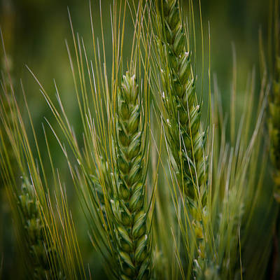 Surrealism Royalty-Free and Rights-Managed Images - Wheat in the Palouse by David Patterson