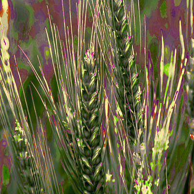 Surrealism Royalty-Free and Rights-Managed Images - Wheat in the Palouse III by David Patterson