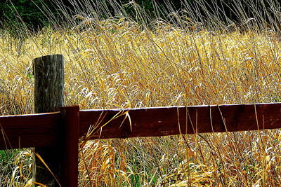 Wheat N' Fence Art Print