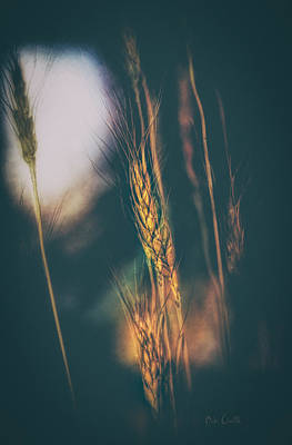 Wheat Of The Evening Art Print by Bob Orsillo