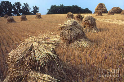 Farm Scenes Photograph - Wheat Stacks  by Garry McMichael