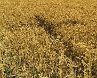 Photograph - Wheat With Cross  by Rob Graham