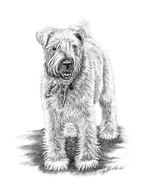 Dog Drawings Drawing - Wheaten Charm by Renee Forth-Fukumoto