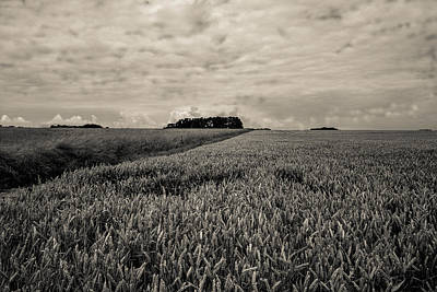 Photograph - Wheatfields by Matthew Pace
