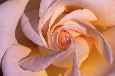 Photograph - Wheel Rose   by Etti PALITZ