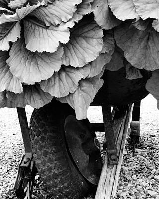 Photograph - Wheelbarrow In Disrepair by Patricia Januszkiewicz