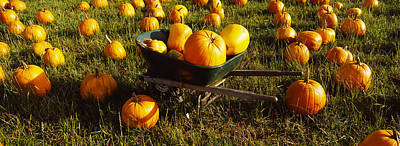 Pumpkin Patch Photograph - Wheelbarrow In Pumpkin Patch, Half Moon by Panoramic Images