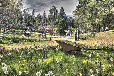 Photograph - Wheelbarrow On Daffodil Hill 2 by SC Heffner