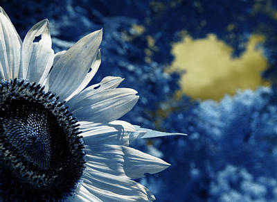 Photograph - When A Sunflower Sleeps by Luke Moore