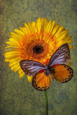 Gerbera Photograph - When Butterflies Dream by Garry Gay