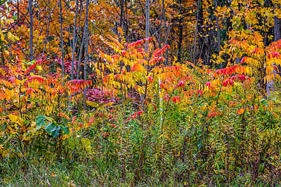 Sumac Tree Photograph - When Ditches Party by Steve Harrington