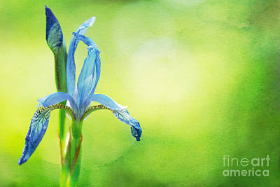 Siberian Iris Photograph - When In Doubt by Beve Brown-Clark Photography