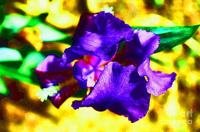 When Iris Eyes Are Smiling Art Print by Luther Fine Art