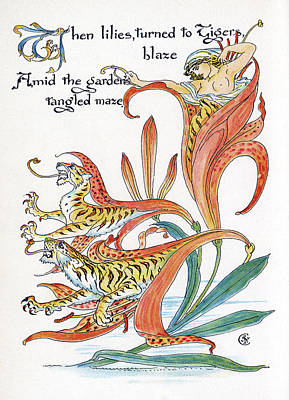 Exotic Plants Drawing - When Lilies, Turned To Tigers, Blaze by Mary Evans Picture Library