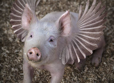Digital Art - When Pigs Fly by Rick Mosher