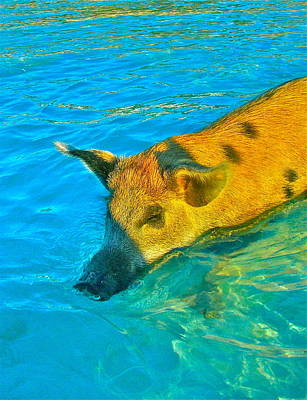 When Pigs Swim Art Print by Kim Pippinger