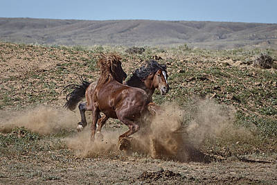 Forelock Photograph - When Stallions Collide by Wes and Dotty Weber