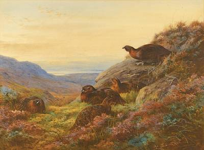 When The Gloaming Comes - Red Grouse Art Print by Celestial Images