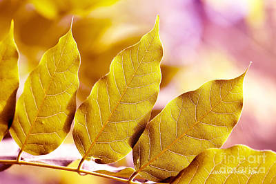 Photograph - When The Leaves Turn Gold by Artist and Photographer Laura Wrede