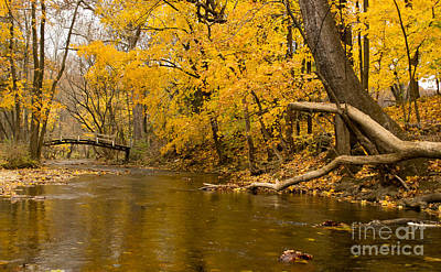 Photograph - When The Stream Flows Through The Golden Dream by Rima Biswas