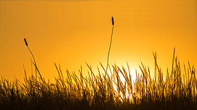 Photograph - when the sun goes down in California by Rima Biswas