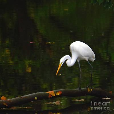 Egret Photograph - Where Are You by Scott Cameron