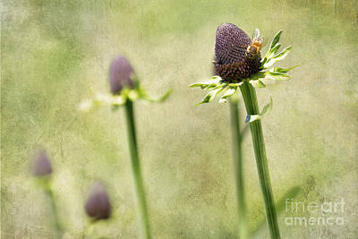 Photograph - Where Have All My Petals Gone by Belinda Greb