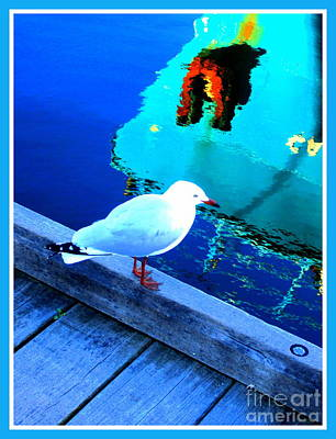 Western Australia Photograph - Where Is My Fish Today by Roberto Gagliardi