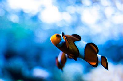 Where Is Nemo Art Print