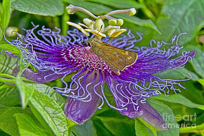 Where Is The Nectar In This Thing Art Print by Gary Holmes