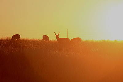 Photograph - Where The Antelope Roam by Trent Mallett