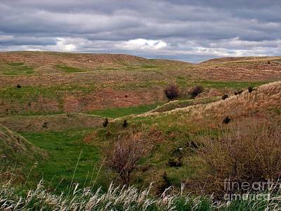 Photograph - Where The Buffalo Once Roamed by Christian Mattison