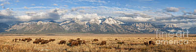 Photograph - Where The Buffalo Roam 2 by Marianne Jensen