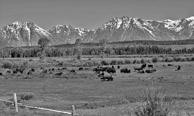 Photograph - Where The Buffalo Roam Black And White by Robert  Moss