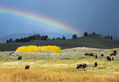 Photograph - Where The Buffalo Roam by Deby Dixon