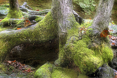 Photograph - Where The Butterflies Go - Mossy Trees - Nature by Jason Politte