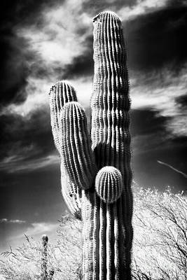 Photograph - Where The Cactus Grow by John Rizzuto