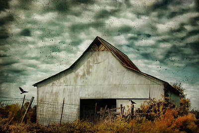 Country Scene Photograph - Where The Crows Roost In Autumn by Jai Johnson