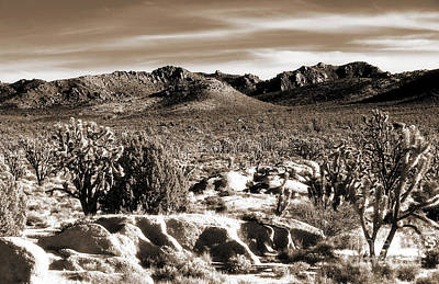 Photograph - Where The Desert Trees Grow by John Rizzuto